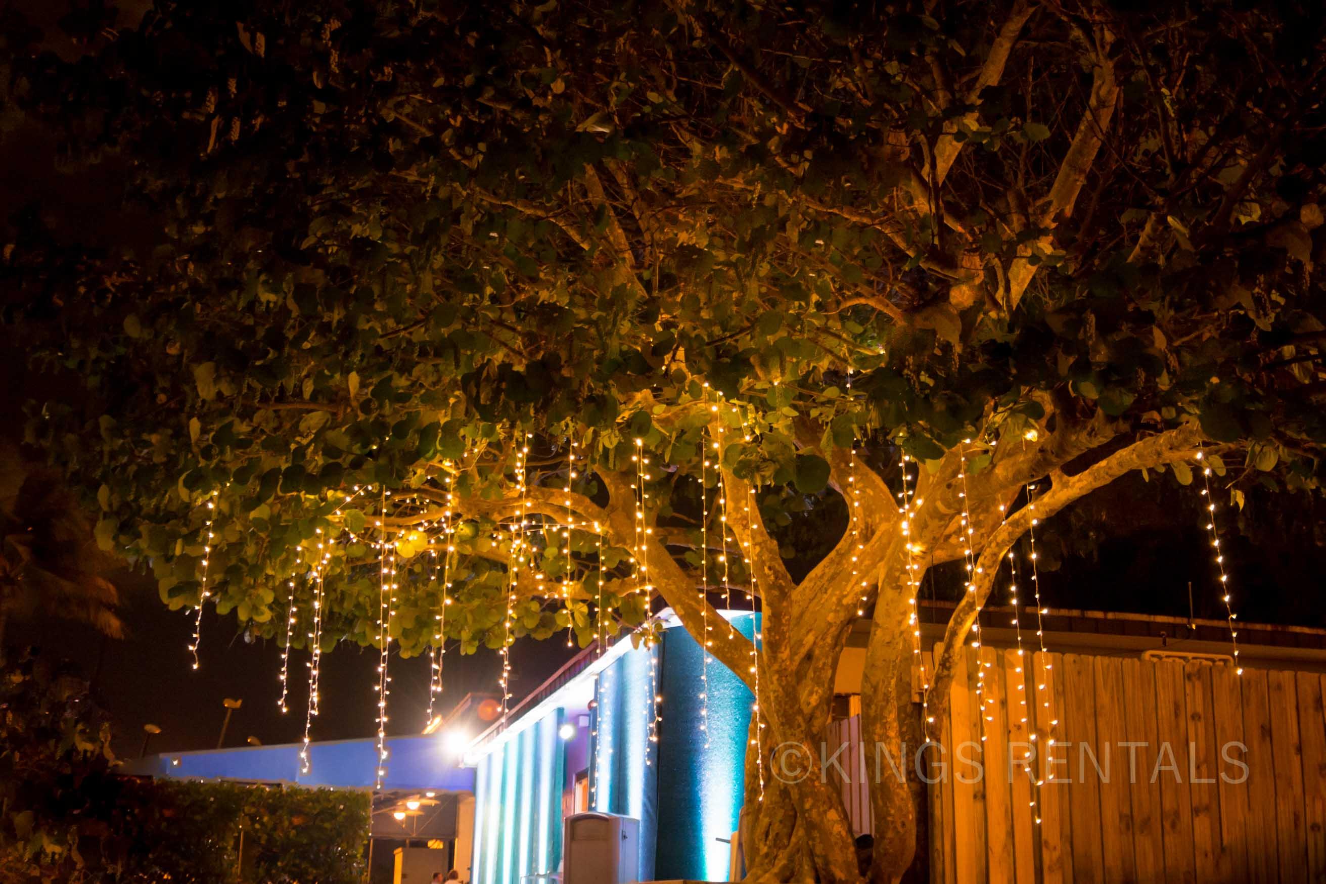 String Lights Rental : STRING LIGHTS RENTAL